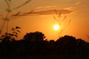 sunset perry farm